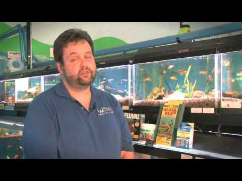 How To Get Rid Of Algae In Your Fish Tank