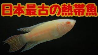 影が薄いけど魅力的な熱帯魚を お迎えしました