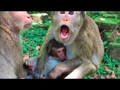 One Baby Crying went he can not find mother, mother walk away from him - Angkor Daily 497