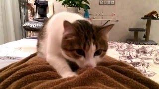 Кошка мурлыкает и делает интимный массаж