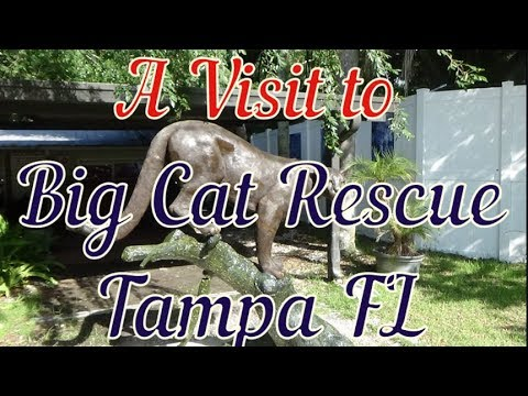 A Visit to Big Cat Rescue of Tampa