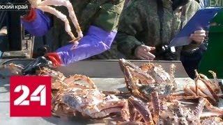 Контрабандисты вывезли из России ценных морепродуктов на 36 миллионов рублей - Россия 24