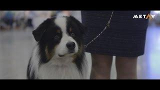 Всемирная выставка собак в России: WDS-2016
