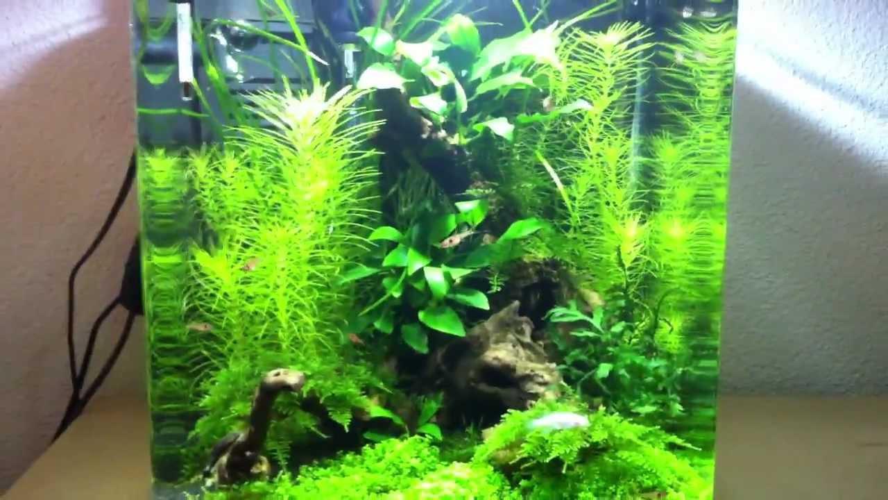 Fische & Aquarien nano Becken Aquarien Eheim Aquastyle 16