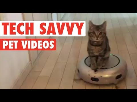 Tech-savvy Pets || Funny Pet Compilation