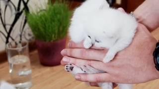 Кошка спасает котят