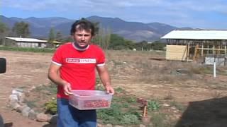 Chile Conectado hortalizas miniatura