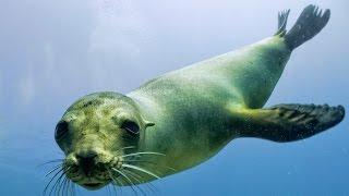 Flaviyake - Lonely Seal