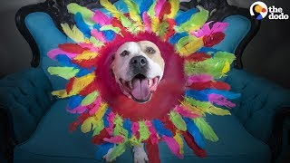 Dogs with 'GLAM CONES' Help Shelter Dogs Get Adopted | The Dodo