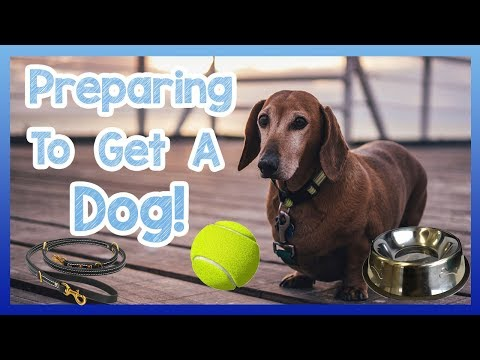 preparing-to-get-a-dog!-top-5-things-you-should-know-before-you-get-a-dog---tips-and-items!