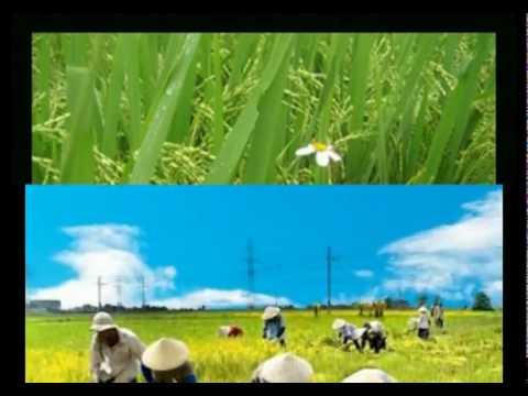 Nghe tiếng trống quê hương - quê Thái Bình của Thầy Hùng.flv