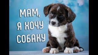 Что нужно знать, прежде чем завести щенка? | Хочу собаку | Советы