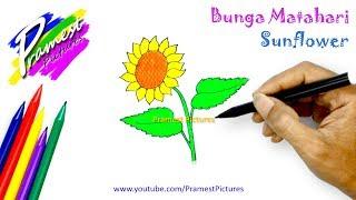 Bunga Matahari   Belajar Menggambar Dan Mewarnai Gambar Untuk Anak-anak