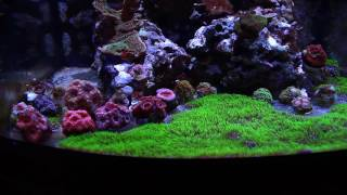 fusion 10g and nanocube 28g mid november 2016 update