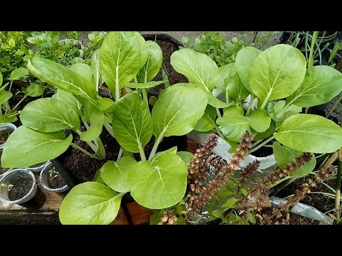 Best Way To Plant A Vegetable Garden