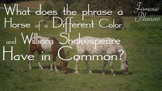 Horse of a Different Color - Famous Phrases with Eddie Brill