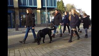 Hund auf Probe - Die Haustier-AG der Städtischen Realschule Schleiden