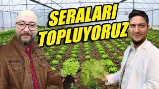 SERALARDAKİ MARUL - DOMATES VE BİBERİ TOPLAYIP SATIYORUZ !! | HOF BERGMANN #12 | FS19 !!