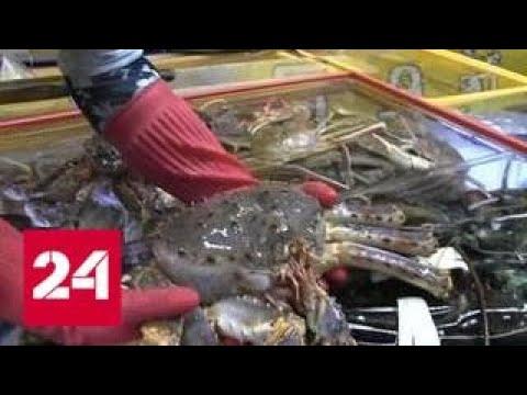 Крабовые войны на Сахалине: как работает хорошо отлаженный криминальный бизнес - Россия 24