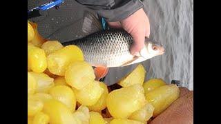 Рыбалка на ФИДЕР Крупная плотва клюёт на каждом забросе на на ОСОБУЮ кукурузу