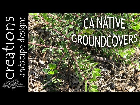 Top 3 California Native Plants For Groundcover