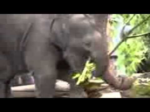 Funny Avatar VideoKaynak: YouTube · Süre: 2 dakika29 saniye