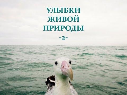 Автор ролика Виталий Тищенко (Ростов-н/Д). Улыбки живой природы-2