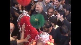 baramdagi zuljanah lal badshah 8 muhhram 2014 chamra mandi lahore imambarghah hussainia must watch
