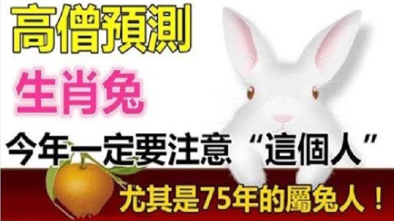 高僧預測:生肖兔,今年是你的人生十字路口,一定要注意一個人,尤其是75年的屬兔人 - 知識命理 - YouTube