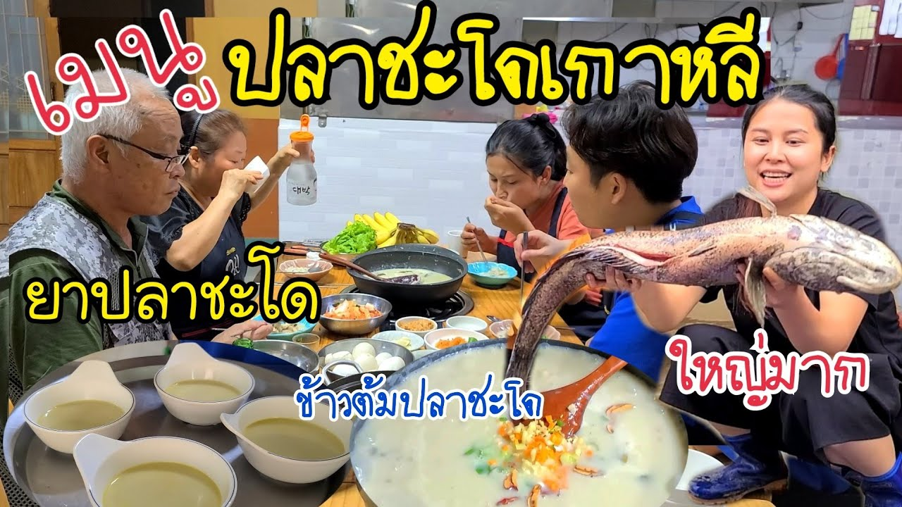 EP.380 | ปลาชะโดเกาหลี FCคนไทยให้มา เเม่ย่าดีใจมาก บอกจะเอาไปทำยา ที่เหลือทำข้าวต้มปลาชะโดกินจ้า