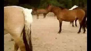 des chevaux ki se battent