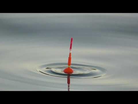 1/30水サビキ釣り ウキが沈んでアジがヒット