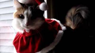 Emme the Cat in a Santa Hat