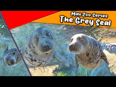 Making a Grey Seal habitat in a our Mini Zoo series : The Netherlands.  