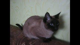 ИМЕНА ДЛЯ КОТОВ КОШЕК Как назвать кота КЛИЧКИ ДЛЯ КОТОВ КОШЕК Видео про котов