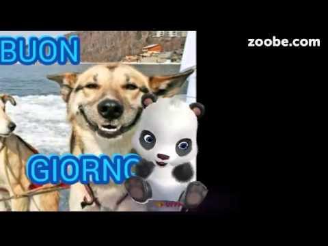 Buongiorno con un sorriso youtube for Buongiorno con gattini
