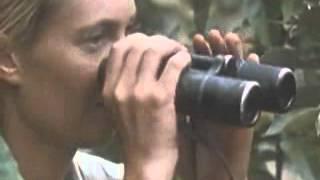 Jane Goodall Study of Chimpanzees