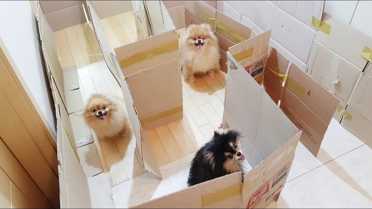 미로 감옥에 갇힌 강아지!