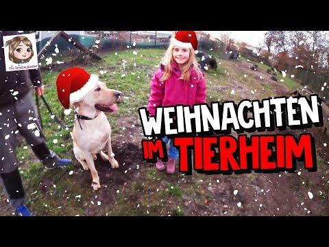 WEIHNACHTEN IM TIERHEIM 🐱 Spenden für die Tiere 🐶 Hannahs neuer Freund Ulf