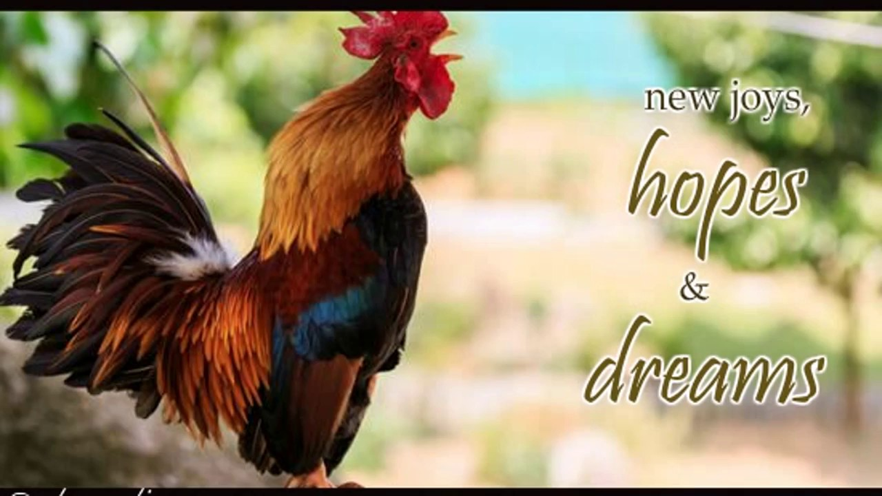Chinese New Year 2017 4715 Rooster Wishes Ecard Greeting