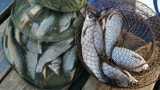 Плотва пошла на Ладожском озере весенняя рыбалка на крупную плотву
