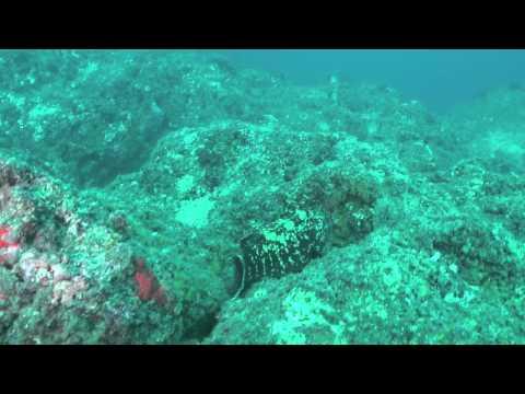 immersione, dive, sea, videosub, panasonic, ea
