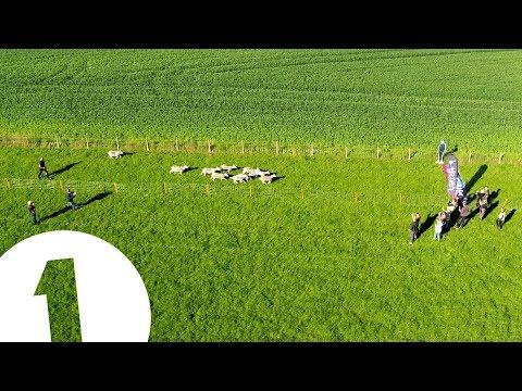 Radio 1's Big Sheep Dash