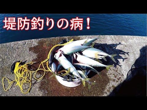 【瞬殺】堤防足元に落とすだけでありえないほどよく釣れる!