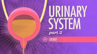 Urinary System, part 2: Crash Course A&P #39