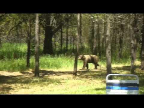 THATS A FRICKIN' BEAR (Athol Idaho) 7-4-2011