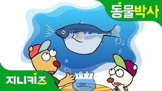 물 속에서도 숨을 쉰다고?   물고기의 호흡   물고기 아가미   동물박사★지니키즈