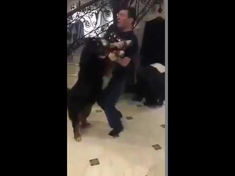 Луценко танцует с собакой