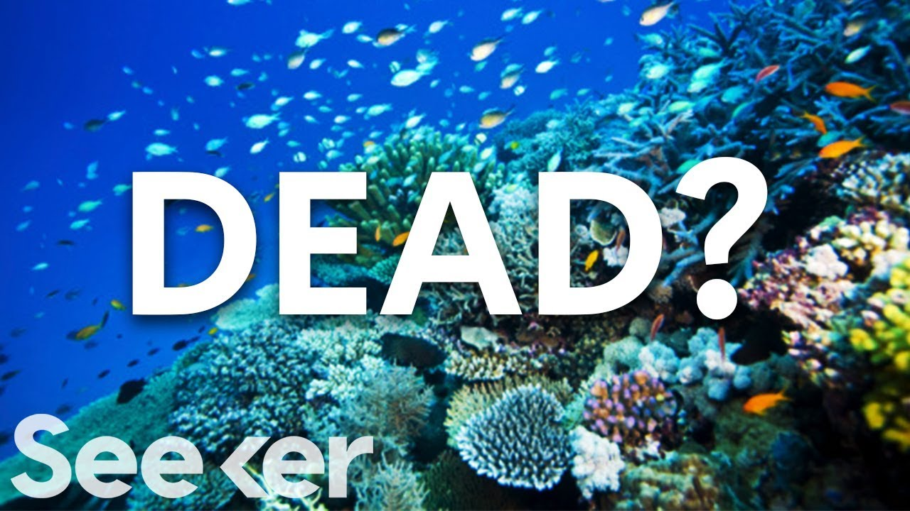 Great Barrier Reef Dead >> Is The Great Barrier Reef Actually Dead? - YouTube