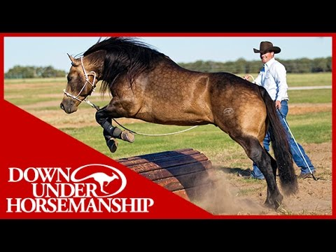 Clinton Anderson: Obstacle Course Training at the Ranch Rall